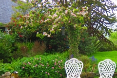 may in our garden